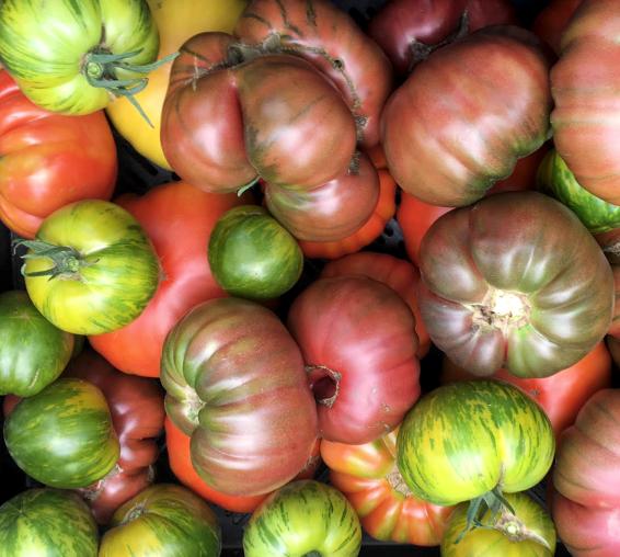 Obercreek Farm tomatos.png